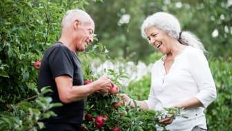 Fra arbejdsliv til pensionsliv: Tre medlemmers erfaringer