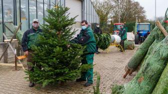 Steve Wustack (von links), Kevin Sass, Alexander Thiel und Alexander Zert verpacken die Weihnachtsbäume für den Transport.