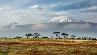 Amboseli National Park, Kenya. Fotokilde: Unsplash.com