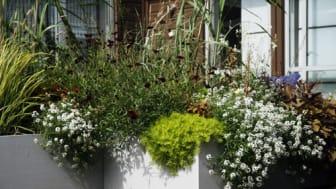 Månadens blomma - maj 2010