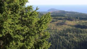 Wallenbergseminarium 19 november: Rewilding as a New Paradigm for Nature Conservation?