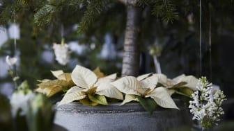 Att ställa julgranen i en vacker kruka istället för i en klassisk julgransfot är fint.