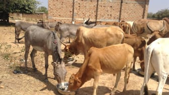 Eine Förderung des Tierwohls trägt auch dazu bei, Menschen vor Armut zu bewahren. (Foto: TAPO)