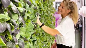 Ellen Bergström, en av grundarna, tar hand om de vertikala odlingarna. I hydroponisk odling sparar man cirka 96% av den vattenåtgång som går åt vid odling på friland.