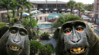 Sea Oats Beach Club in Florida. Monkeying around with timeshare contract?