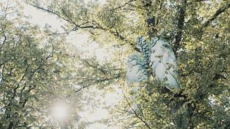 Trädens hemliga värld i Folkets Park är en äventyrsvandring visualiserar några av trädens många funktioner. Foto: Pierre Ekman
