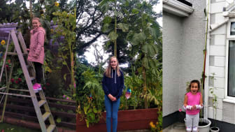 Tallest Sunflower Winner Evie Stirling (centre) and runners-up Ellie Blair (left) and Cali McCormick (right)