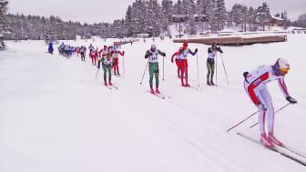 Trysil-Knut rennet