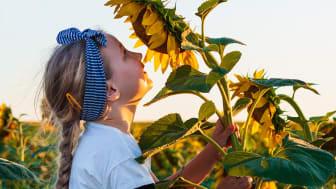 Nordiskt klimatwebinar: Samarbete avgörande för att skapa mer hållbara matsystem