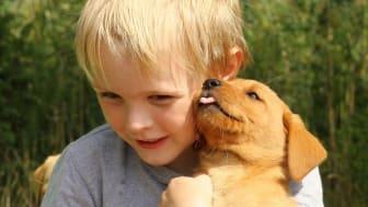 Sällskapsdjuren – en hälsokur