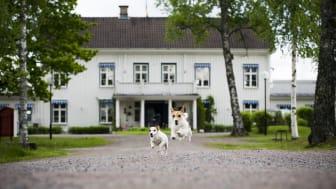 Lansmansgarden Hus & Hund 02.jpg