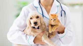 Nu finns husdjurens egen vårdguide, där djurproffs via telefon svarar på oroliga hundar och kattägares frågor. Foto: Istock