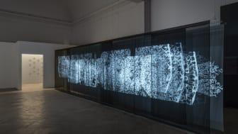 Andrew Carnie, Blue Matter, 2019