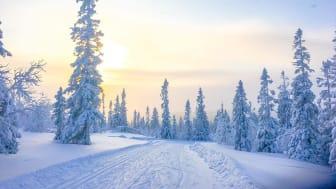 Storhogna-vinterlandskap-skidspår.jpg