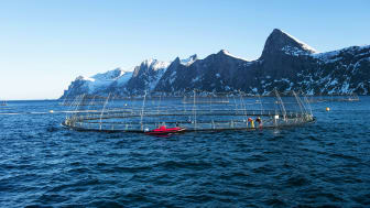 Strong growth in Norwegian salmon exports