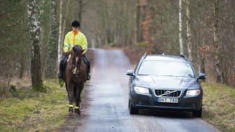 Omkörning av häst