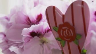 Blomstrande kärlek –  Allas hjärtan i kruka den 14 februari