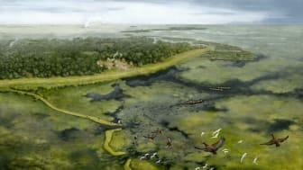Study sheds light on pre-Columbian life in understudied area of Amazon