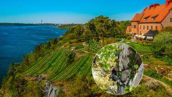"""På en klippa högt ovan vardagen erbjuds nu - förutom druvplockning - även friklättring i """"lianer"""" - ett unikt tillskott för hela besöksnäringen."""