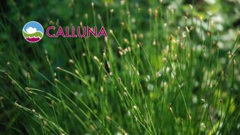Calluna-Nytt samlar information till kunder, samarbetspartners och andra intresserade om vad som är på gång hos oss på Calluna och i branschen. Du får tips om aktuella tjänster och händelser, projektresultat, nya publikationer och spännande projekt.