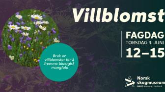 Ved å øke egen og andres kunnskap om villblomster ønsker Anno Norsk skogmuseum å bidra til biologisk mangfold.