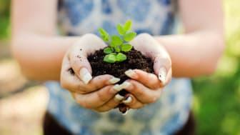 Händer som håller i en planta