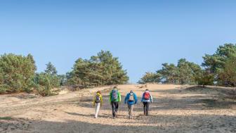 Wanderer auf der Binnendüne Storkow, die am 66-Seenwanderweg liegt (TMB-Fotoarchiv/Steffen Lehmann)