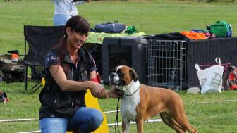 Den 26-27 maj samlas 528 sköna boxerhundar från hela världen i Malmö. Missa inte det! Foto: Lotta Johansson.