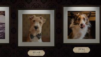 Nu startar Sveriges största digitala hundtävling Dog of Pigalle!