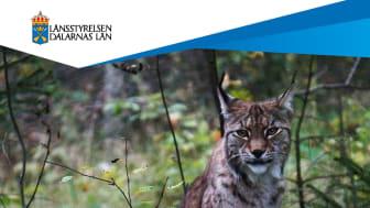 Förvaltningsplanen är en viktig del i Länsstyrelsens arbete med att skapa en väl fungerande och förutsägbar rovdjursförvaltning.