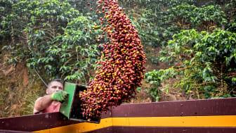 Finca de Eladio Mantero Rivera Costa Rica.jpg
