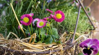 Månadens blomma – mars 2012