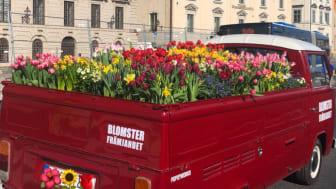 Sprid glädje med svenskodlade tulpaner och andra prydnadsväxter och stötta samtidigt svenska trädgårdsmästare.