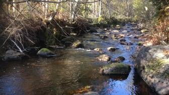 Naturvårdsprojekt för att nå miljömål i Sunne kommun