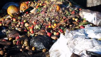 Lite växthusgaser från rätt skött kompost