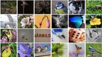 I månadstävlingen med temat Närbild deltog hela 37 insända bilder - bland annat dessa. Bilder från Lindesbergs Fotoklubbs hemsida.