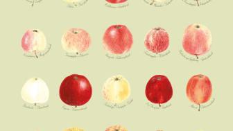En äppelaffisch från Svensk Trädgård