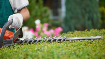 Bild från Shutterstock