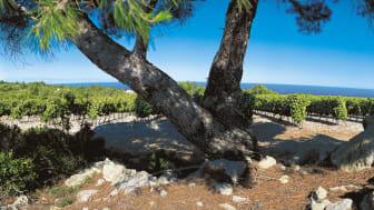 Som hjälp för Pays d'Oc IGP-producenterna att anpassa sig till klimatförändringen och bevara syran i sina viner har man infört druvsorter som normalt odlas i varmare klimat. I dag är totalt 58 druvsorter godkända för Pays d'Oc IGP.