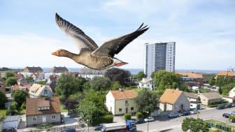 Höganäs billigast i Skåne när det gäller kostnader för nödvändiga nyttigheter.