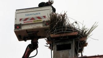 Bau Storchennest_Steppach