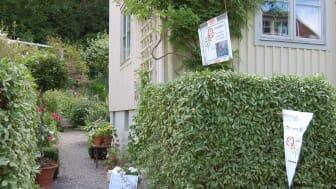 En av tusentals trädgårdar runt om i landet som valt att bjuda in till visning.
