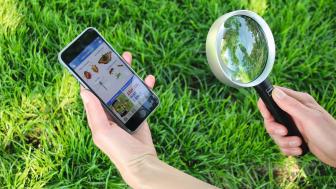 Zählen was zählt - mit der NABU-App Insekten in Wald, Wiese und Garten zählen