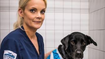 Anna Wallenberg, Leg Djursjukskötare, Wixa och Grillpinnen.