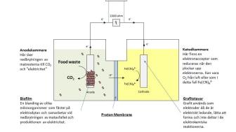 Elektricitet av matrester, modell