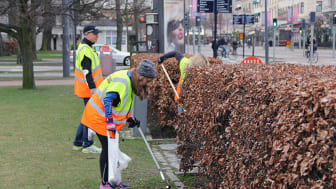 Politiker, tjänstepersoner, handlare och fastighetsägare städar upp staden och sätter fokus på nedskräpningsfrågan. Foto: park- och naturförvaltningen