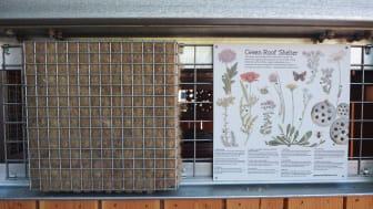 Green Roof bin store plant information panel