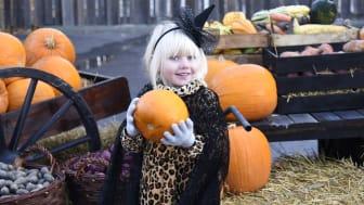 Halloween på Furuvik är tillbaka