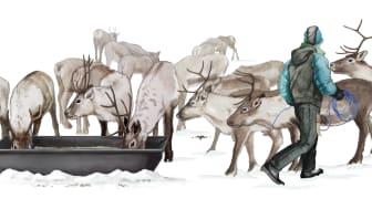 Stödutfodring av renar. Illustration: Juliana D. Spahr