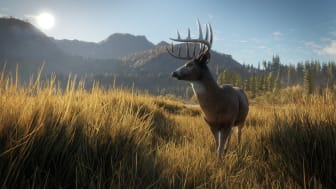 Whitetail buck in the setting sun.